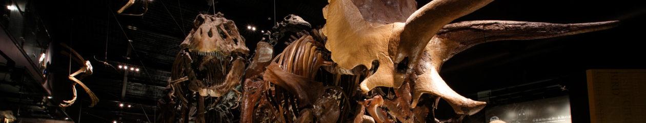 御船町恐竜博物館ブログ