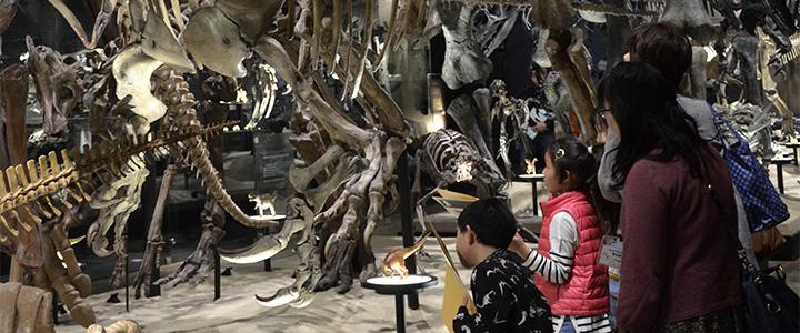 恐竜を観察しているところ