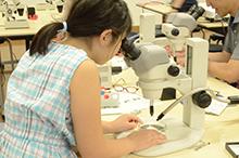 実体顕微鏡を用いて小さな化石を探している様子