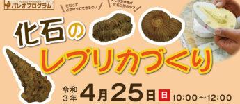 4/25 パレオプログラム『化石のレプリカづくり』